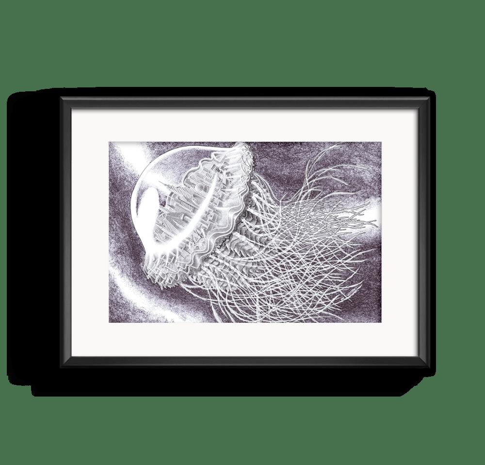 meduse-romain-lardanchet