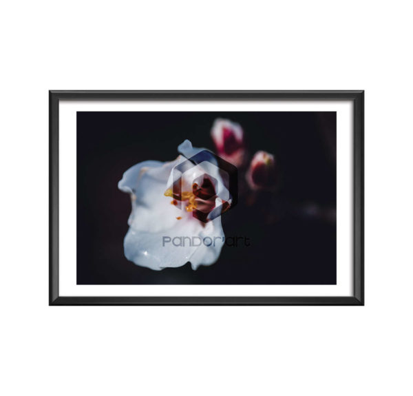 ALE Thomas Manillier fleur