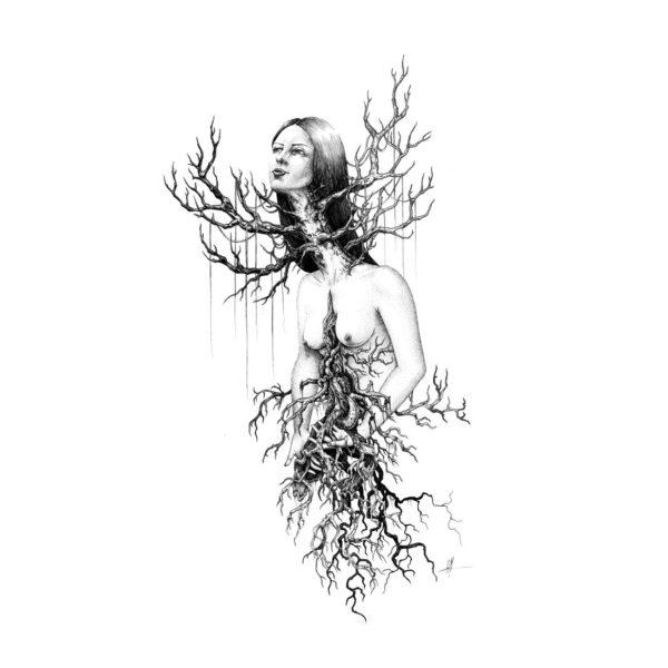 Arborescence-Camille-Murgue-SC