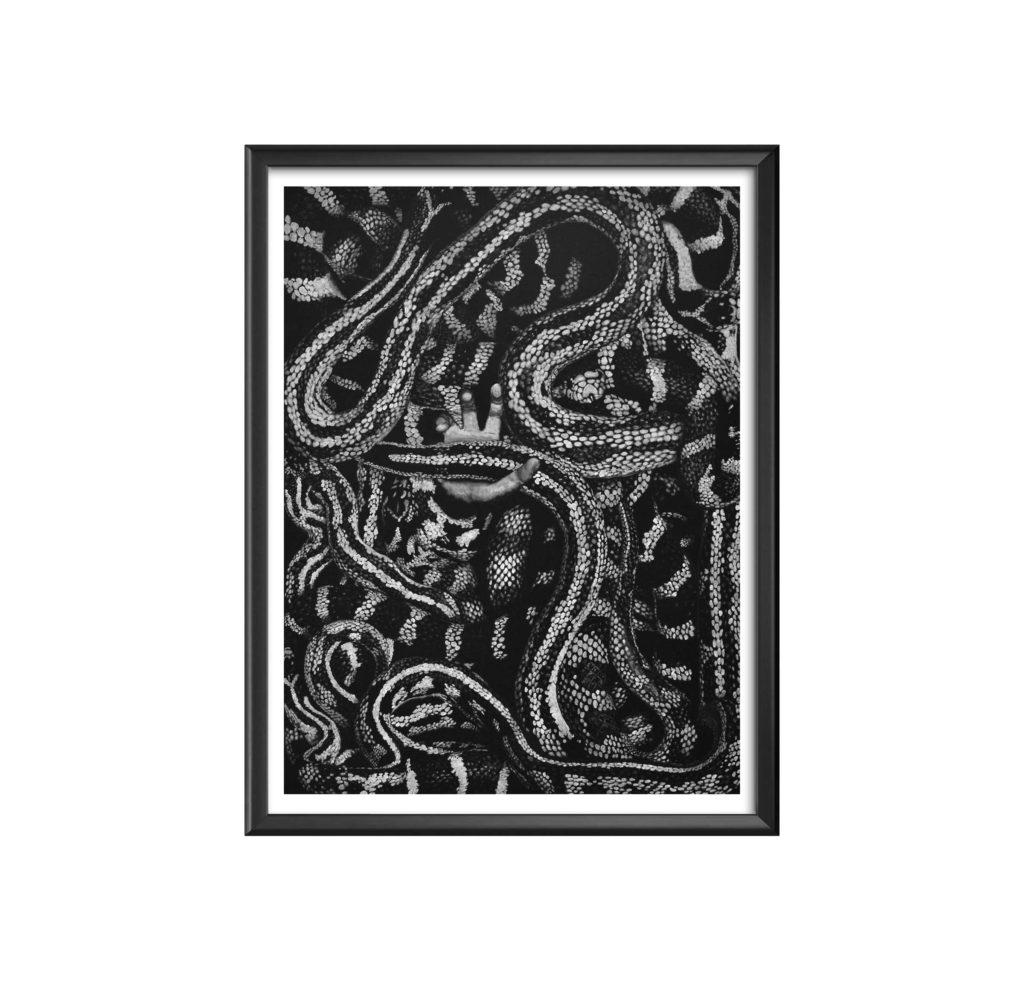 AC-serpents-GRANDE - antoine seurot - peinture acrylique sur toile