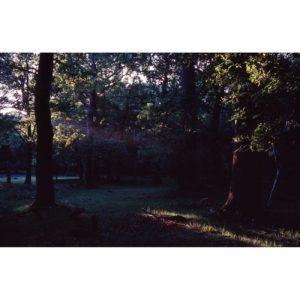 Mini-46-NewForest-Sebastien-Fantini-photographie-d'art-contemporain