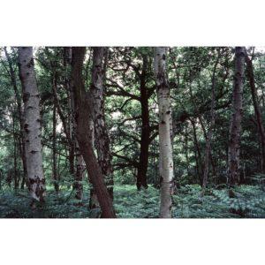Mini-56-Sherwood-Sebastien-Fantini-photographie-d'art-contemporain