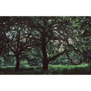Mini-59-Sherwood-Sebastien-Fantini-photographie-d'art-contemporain