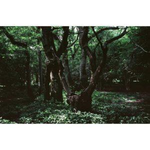 Mini-66-Hatfield-Sebastien-Fantini-photographie-d'art-contemporain