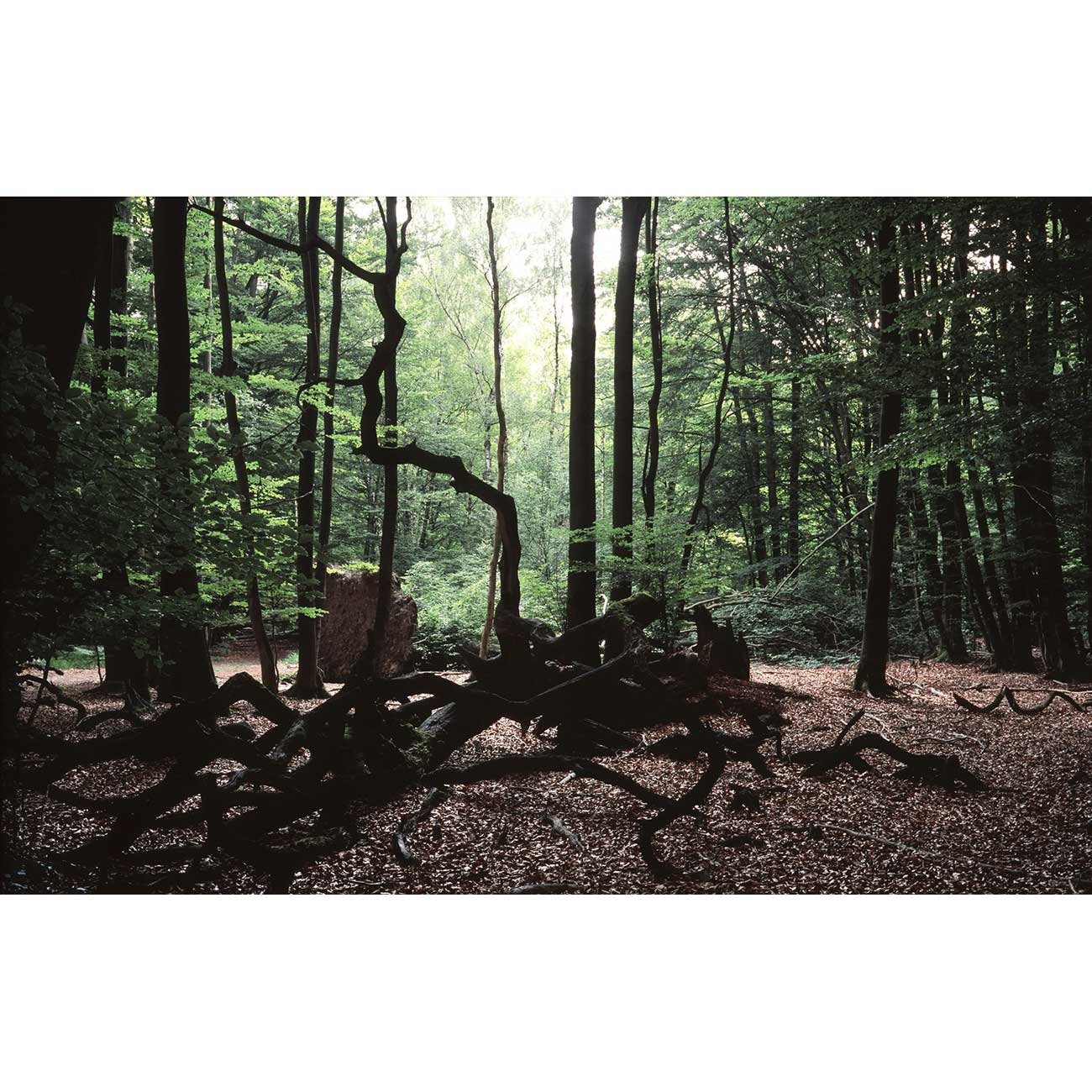 Mini-76-Sabawald-Sebastien-Fantini-photographie-d'art-contemporain