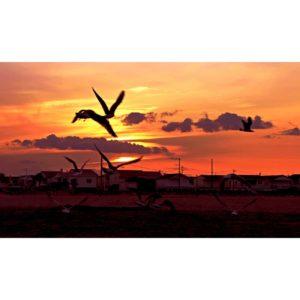 Gruissan-Sunset Thomas Lemaire